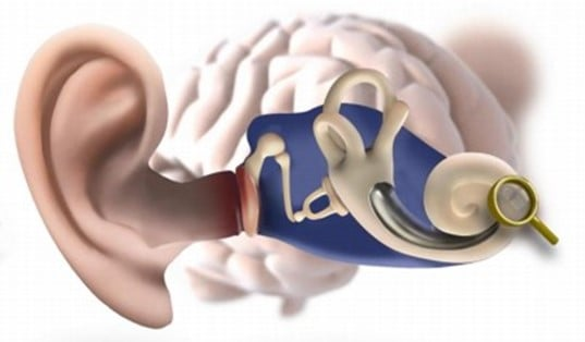 whole ear diagram